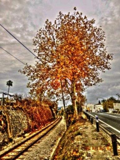 20121220230355-arbrecarretera.jpg