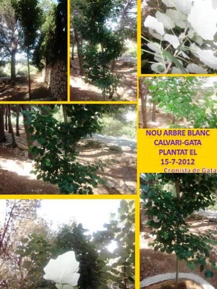 20130618221900-arbreblancnou.jpg